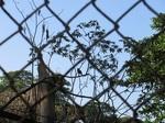 茶色い鳥2.jpg